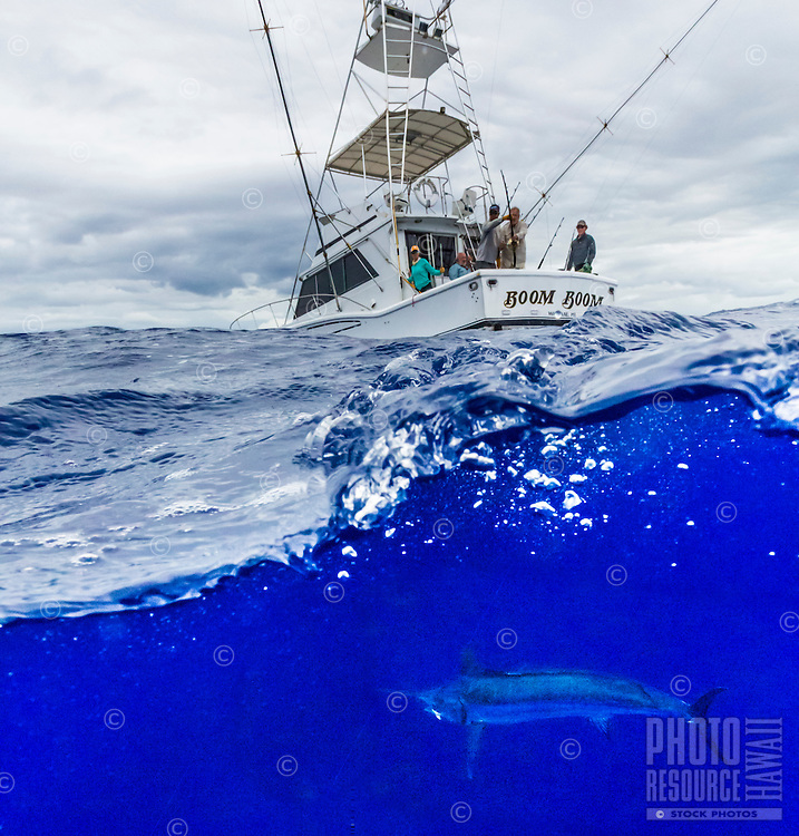 The crew of sport fishing boat Boom Boom wait for their hooked marlin to tire itself out before reeling it up off the coast of O'ahu.