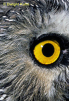 OW11-014z  Saw-whet owl - close up of eye - Aegolius acadicus