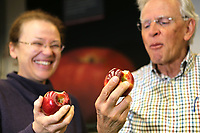 Dr. Katherine Evans, Associate Scientist and Associate Professor of Horticulture (left) and retired Washington State University Emeritus Professor of Horticulture, Dr. Bruce Barritt (right), take a bite of Cosmic Crisp apples at the WSU Tree Fruit Research and Extension Center, in Wenatchee, WA on April 13, 2018. (Photo by Karen Ducey Photography)