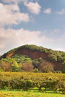 Domaine Borie la Vitarèle Causses et Veyran St Chinian. Languedoc. France. Europe. Vineyard.