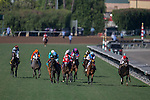 ARCADIA, CA - NOV 05: Kitten's Cat #10(red mask), ridden by Luis Saez, wins the Juvenile Turf Sprint Stakes at Santa Anita Park on November 4, 2016 in Arcadia, California. (Photo by Kazushi Ishida/Eclipse Sportswire/Breeders Cup)