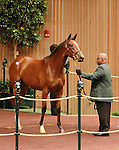 September 08, 2014:Hip #29 Curlin - Leslie's Lady filly consigned by Clarkland Farm sold for $1,100,000 to Bridlewood Farm at the Keeneland September Yearling Sale.  Candice Chavez/ESW/CSM
