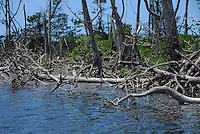 Flordia Everglades National Park