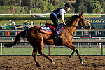 ARCADIA, CA  OCTOBER 30: Breeders' Cup Filly & Mare Turf entrant Iridessa, trained by Joseph O'Brien, exercises in preparation for the Breeders' Cup World Championships at Santa Anita Park in Arcadia, California on October 30, 2019.  (Photo by Casey Phillips/Eclipse Sportswire/CSM)