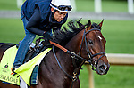 LOUISVILLE, KY - MAY 02: Shagaf, trained by Chad Brown and owned by Shadwell Stable, exercises and prepares during morning workouts for the Kentucky Derby and Kentucky Oaks at Churchill Downs on May 2, 2016 in Louisville, Kentucky. (photo by John Voorhees/Eclipse Sportswire/Getty Images)