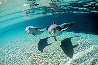 bottlenose dolphins, Tursiops truncatus, Dolphin Quest, Hawaii Not to be used for anti-captivity campaigns, captive