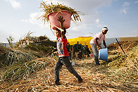 A young boy carries a bucket full of cut sugar cane in a cattle camp near the town of Latur. Sugar cane has been blamed by many for being one of the factors contributing to drought conditions in the region as it requires high amounts of water during its growth. Failed rains have left farmers unable to grow this profitable crop, leaving many in financial trouble