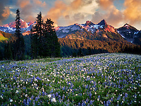 Sunrise with wildflowers and Tatoosh Mountains. Mt. Rainier National Park, Washington