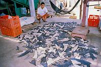 Shark fins (Mexican artesanal fishery), Various species, La Paz, Mexico, Sea of Cortez, East Pacific Ocean