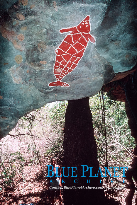 illustration, aboriginal rock art on cave ceiling portrays dugong, northern Queensland, Australia