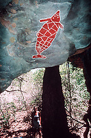 illustration, aboriginal rock art on cave ceiling portrays dugong, northern Queensland, Australia