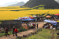 Luoping, Yunnan. The village of Jinji Lin. Tourists from the cities come across the beekeepers' tents on the road leading to the panoramic views from the Hills of the Golden Rooster. Nearly 10 million people visit the region during the flowering of the rape.