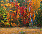 Vilas County, WI<br /> Mixed hardwood and evergreen forest in fall color a the edge of a bog near Lone Tree lake, Northern Highland American Legion State Forest