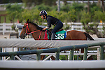 MAY 2,2015: Duger,trained by John Size,prepares for the Champions Mile at Sha Tin in New Territories,Hong Kong. Kazushi Ishida/ESW/CSM
