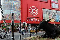 INDIA Andhra Pradesh, Vishakhapatnam, cow infront of shopping mall / INDIEN Visakhapatnam, Kuh vor einem Einkaufszentrum
