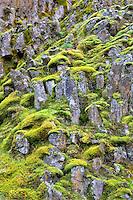 Moss covered rocks. Near Catherine Creek. Columbia River Gorge National Scenic Area, Washington