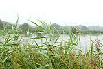 Europa, DEU, Deutschland, Nordrhein-Westfalen, Niederrhein, Wachtendonk, Fluss (Niers), Aue, Ueberschwemmung nach Regen, Schilf, Natur, Umwelt, Landschaft, Jahreszeiten, Stimmungen, Landschaftsfotografie, Landschaften, Landschaftsphoto, Landschaftsphotographie, <br /> <br /> [Fuer die Nutzung gelten die jeweils gueltigen Allgemeinen Liefer-und Geschaeftsbedingungen. Nutzung nur gegen Verwendungsmeldung und Nachweis. Download der AGB unter http://www.image-box.com oder werden auf Anfrage zugesendet. Freigabe ist vorher erforderlich. Jede Nutzung des Fotos ist honorarpflichtig gemaess derzeit gueltiger MFM Liste - Kontakt, Uwe Schmid-Fotografie, Duisburg, Tel. (+49).2065.677997, ..archiv@image-box.com, www.image-box.com]