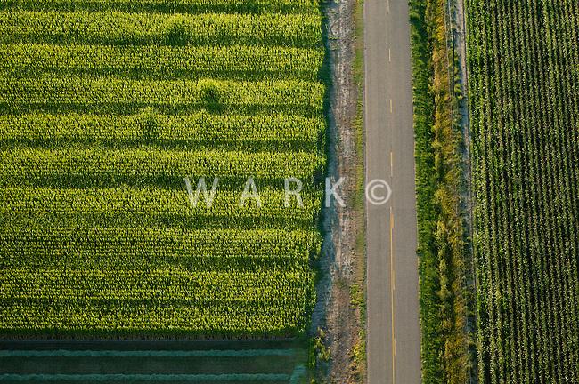 Crop fields, Pueblo County, Colorado.  August 2011