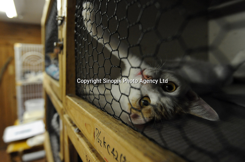 Pets that have been saved from the hokenjos and saved from being gassed at charity called Life-boat that has saved some 8,000 animals. Over 200,000 animals are gassed annually in Japan...photo by  / Sinopix............