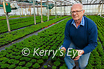 Shamrock from Cools Glasshouse in Ballinskelligs still on track to be presented to the US President Joe Biden on the 17th March pictured here Joe Sugrue.