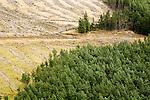 Pine (Pinus sp) tree plantation and clear cut, Glen Isla, Scotland, United Kingdom