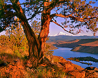 Mt. Jefferson framed by juniper tree at sunrise above Lake Billy Chinnok Oregon