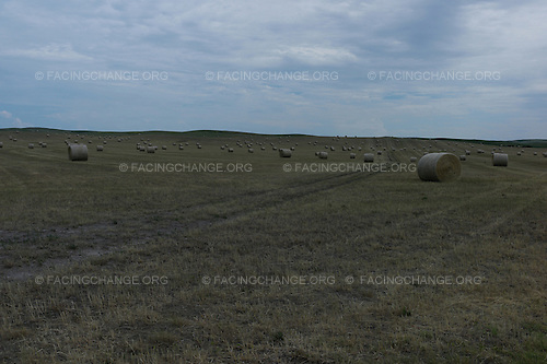 Kyle, South Dakota<br /> July 30, 2011<br /> <br /> A hay field ready for harvest outside of Kyle, South Dakota on the Pine Ridge Indian Reservation. Much of the large tracts of farm land are rented out to white farmers who have the resources to work the land.