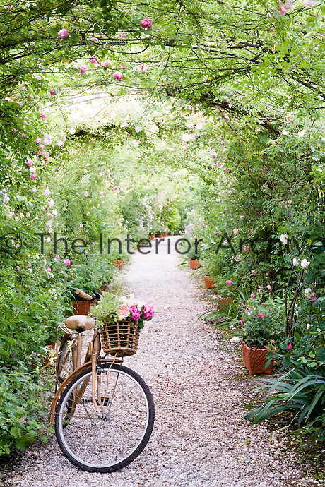 A bicycle with its basket full of freshly picked roses on the garden path under a rose arch