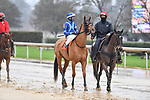 February 27, 2021: #7, Shessomajestic in post parade for the Spring Fever Stakes at Oaklawn Park in Hot Springs, Arkansas. Ted McClenning/Eclipse Sportswire/CSM