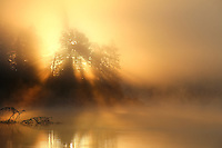 """""""Burning Through the Fog""""<br /> <br /> During this Fall sunrise paddle on the North Kawishiwi River, the sky appeared to be on fire as the sun burned through the fog in the Boundary Waters Canoe Area Wilderness (BWCAW)."""