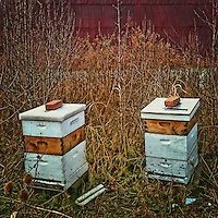Bee hives sitting on small hill beside a barn in winter