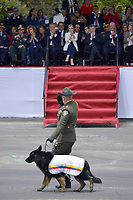 BOGOTÁ - COLOMBIA, 20-07-2018: Sombra, pastor aleman miembro de la direccion antinarcoticos durante el desfile Militar del 20 de Julio con motivo del 208 Aniversario de la Independencia de Colombia realizado por las calles de la ciudad de Bogotá. / Sombra, german shepherd member of the direccion antinarcoticos during the July 20th Military Parade on the occasion of the 208th Anniversary Independence of Colombia that took place trough the streets of Bogota city. Photo: VizzorImage / Diego Cuevas / Cont
