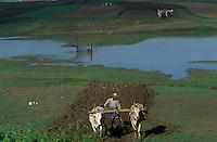 Asie/Birmanie/Myanmar/Haute Birmanie/Mandalay/Amarapura: Le long de la route du port, travaux des champs - Attelages de buffles et pêcheur