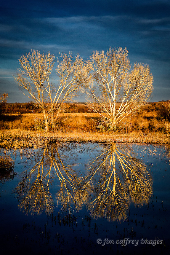 Two trees reflected in a pond at Bosque del Apache National Wildlife Refuge at sunset.