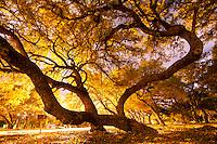 Traveler<br /> Condor Park, Killeen, TX, 10/8/11, 6:27 a.m. 30s
