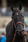 AUG 24,2014:Shared Belief,ridden by Mike Smith,wins the TVG Pacific Classic at Del Mar in Del Mar,CA. Kazushi Ishida/ESW/CSM