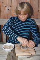 Kind, Junge macht Pesto aus Walnüssen, Sonnenblumenkernen, Olivenöl und Parmesankäse selbst, Sonnenblumenkerne werden mit dem Wiegemesser zerkleinert, Walnuss, Walnuß, Wal-Nuss, Wal-Nuß, Nüsse, Ernte, Juglans regia, Walnut, Noyer commun, Sonnenblumen, Helianthus, Sunflower