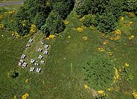 In the hills of the Ardèche near Mont Gerbier de Jonc, an apiary is installed in June to take advantage of the richness of the late blossoming in the mountains. Yellow broom is scattered across the landscape.<br /> Sur les collines ardéchoises près du Mont Gerbier de Jonc, un rucher est installé en juin pour profiter de la richesse des floraisons plus tardive de montage. Les genêts jaunes parsèment le paysage.