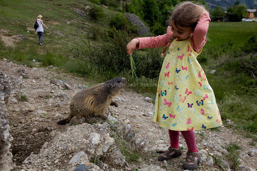 sentier des marmottes entre Eygliers et Montdauphin. Les marmottes n'acceptent que les trèfles et les pissenlits<br /> mountain dogs nearby MontDauphin