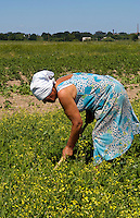 Woman working in farm fields, Ukraine