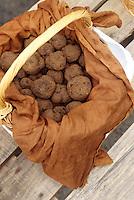 Europe/France/Midi-Pyrénées/46/Lot/Causse de Limogne/Lalbenque: Le marché aux truffes - Détail d'un panier de truffes