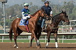 ARCADIA, CA  DECEMBER 26:  #3 Giant Expectations, ridden by Gary Stevens,in the post parade of the San Antonio Stakes (Grade ll) on December 26, 2017 at Santa Anita Park in Arcadia, CA. (Photo by Casey Phillips/ Eclipse Sportswire/ Getty Images)