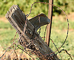 A tired old cedar fence posts leans from the strain of years of abuse and neglect.