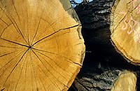 DEUTSCHLAND, Wald, Forstwirtschaft, Holzernte, Baumstamm Eiche