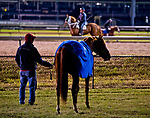 October 25, 2018 : Mind Your Biscuits, trained by Chad Summers, grazes by the track and checks out the competition at Churchill Downs on October 25, 2018 in Louisville, Kentucky. Scott Serio/Eclipse Sportswire/CSM