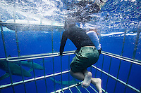 Tourist observing sharks from an underwater cage on a shark tour
