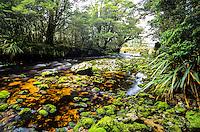Saxon River on Heaphy Track, Kahurangi National Park, Nelson Region, New Zealand