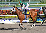 06 February 2010:  Suspicious Six with jockey Jose Lezcano in the Fifth race at Gulfstream Park in Hallandale Beach, FL.