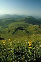 Europe/France/Auvergne/63/Puy-de-Dôme/Parc Régional des Volcans: Détail gentianes