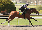 07 April 2011.  Hip #116 ONCEINMYLIFETIME  Kitalpha - Champagne Royal colt, consigned by War Horse Place.